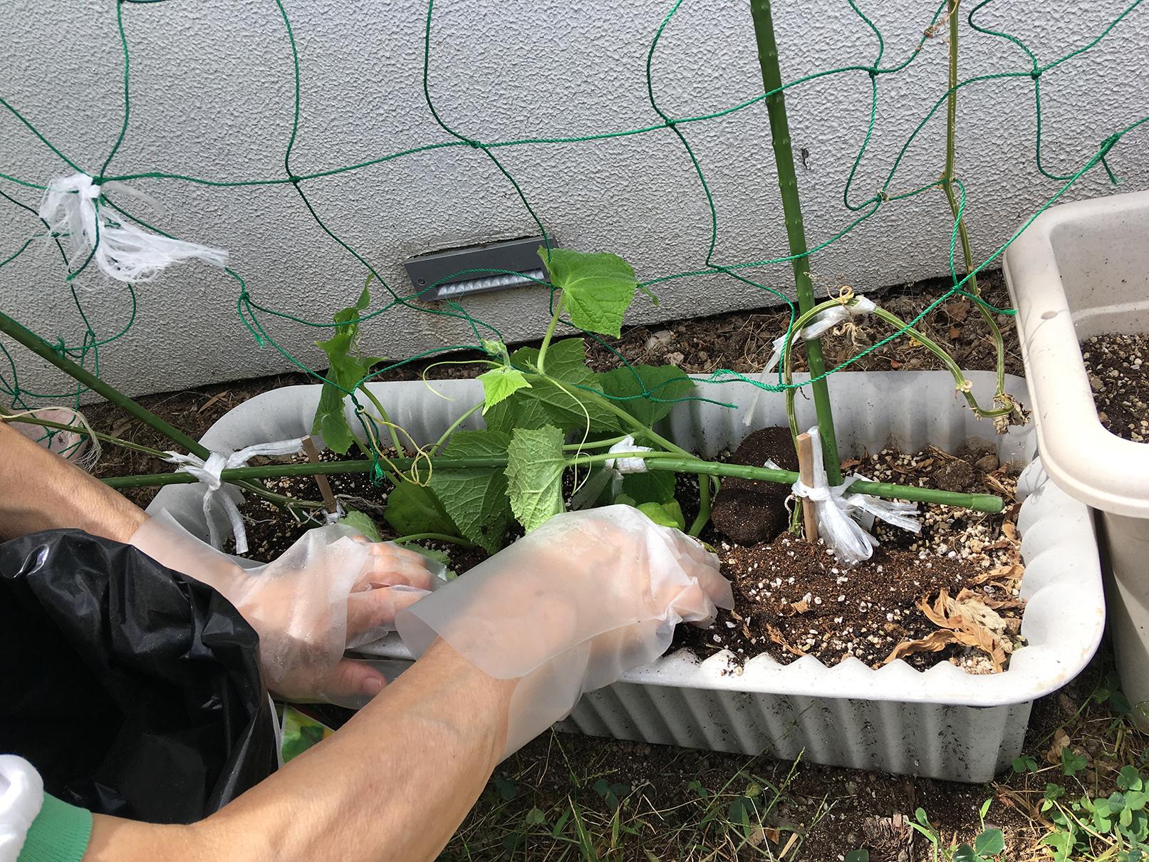 水耕栽培の野菜4